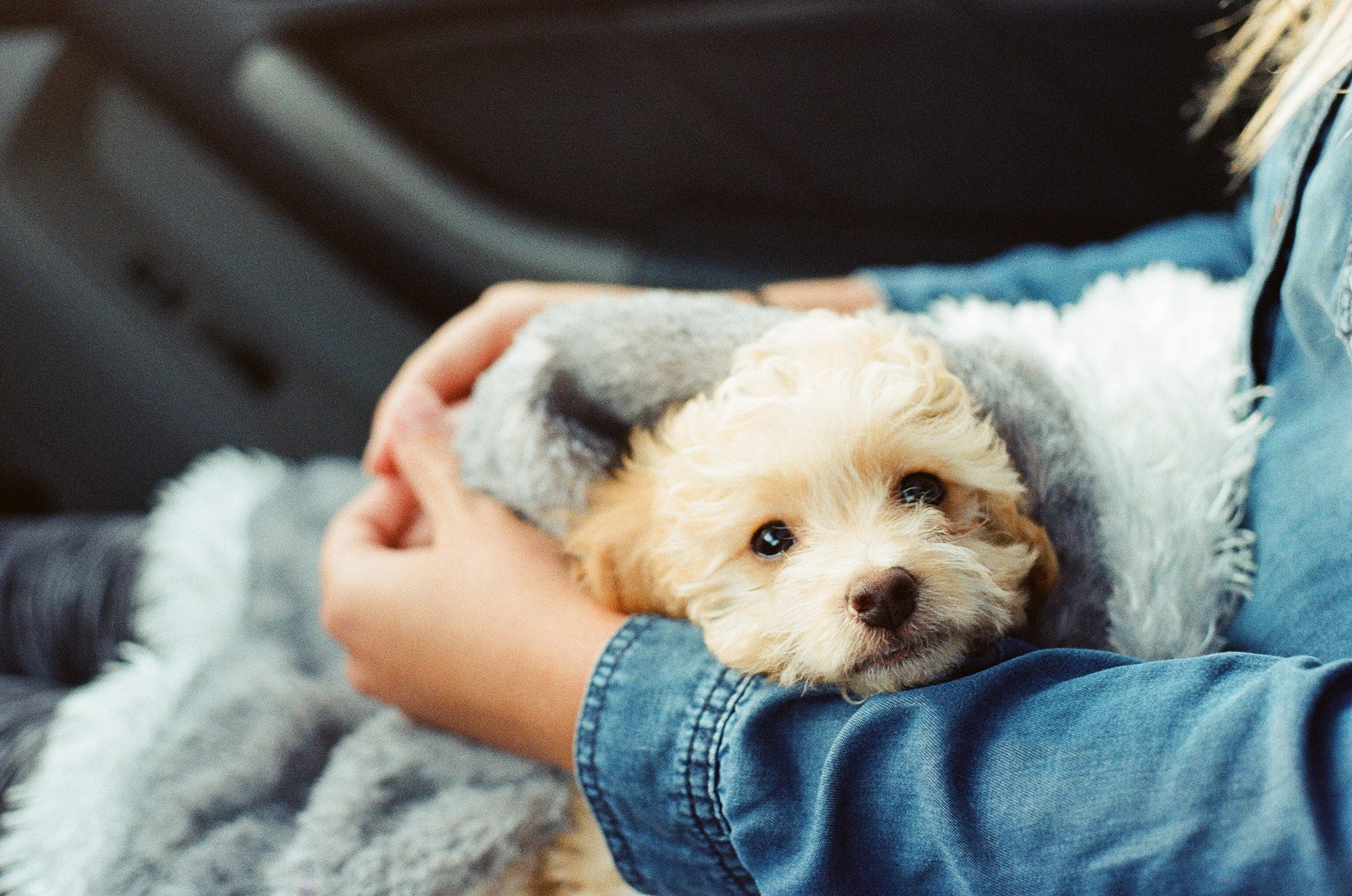 puppy-picture-78