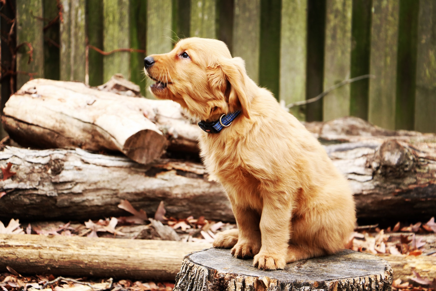 puppy-picture-80