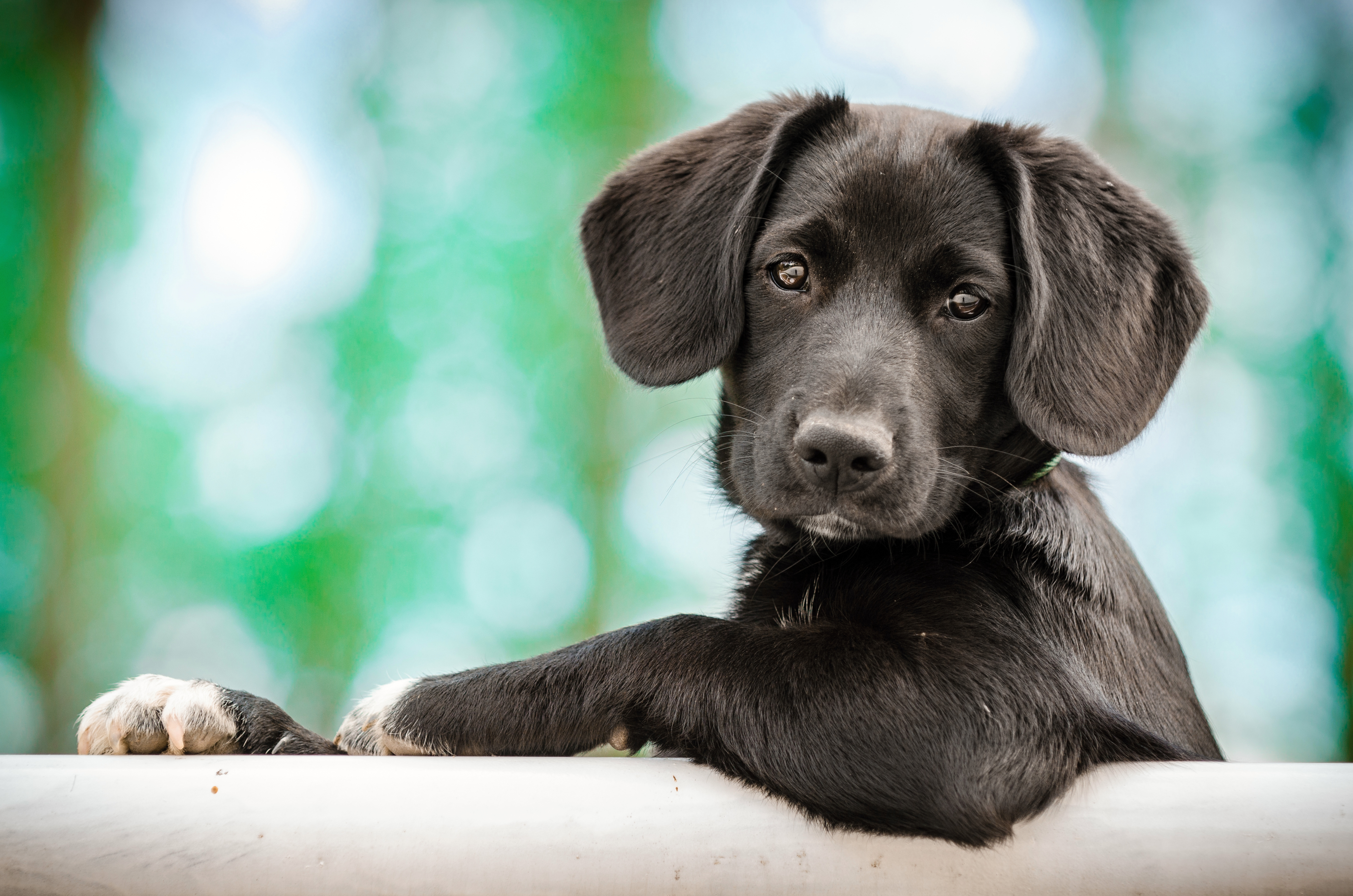 puppy pictures