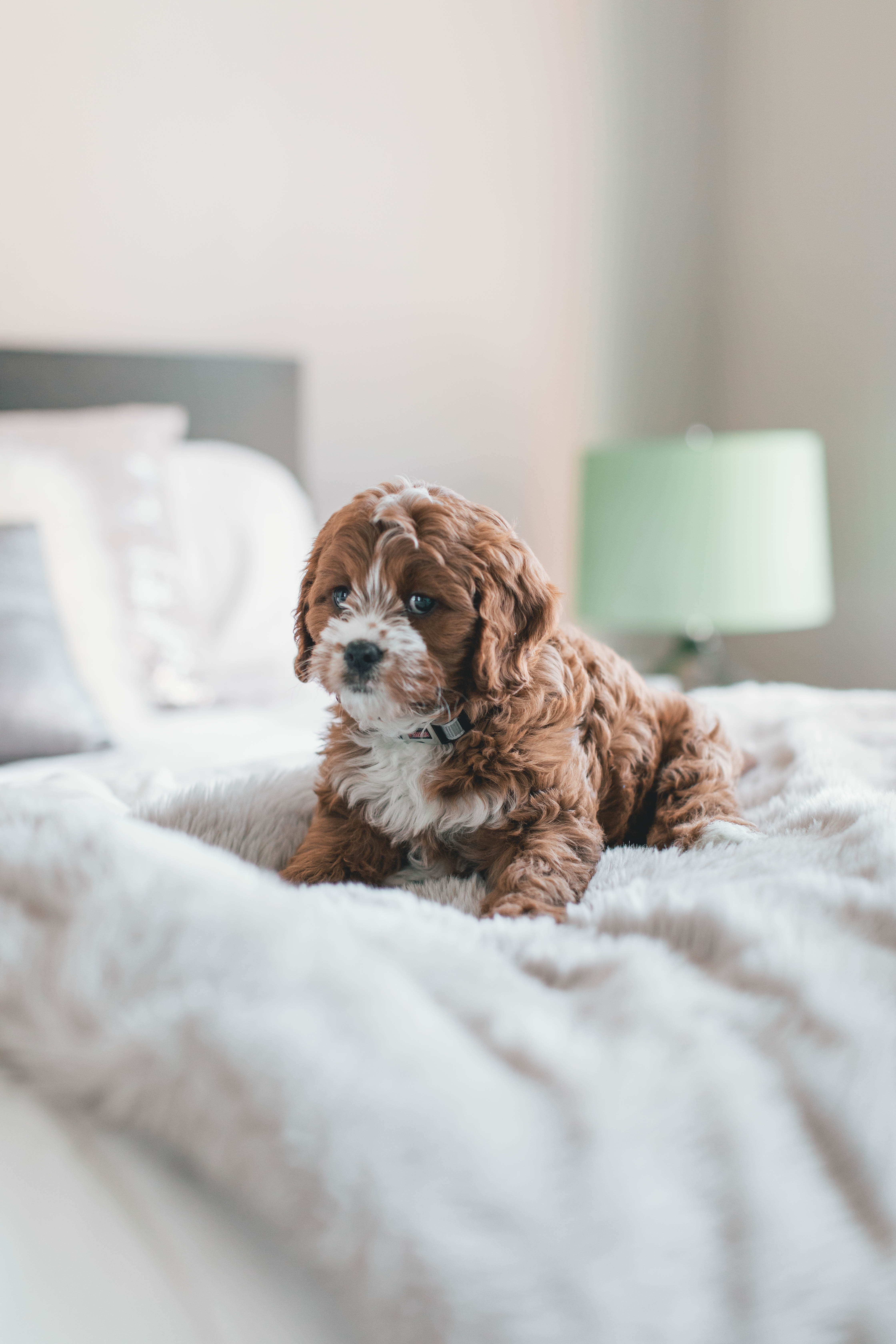 puppy-pictures