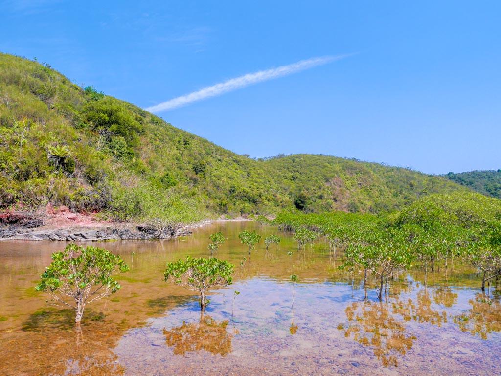 wu gau tong mangrove hong kong nature - laugh travel eat