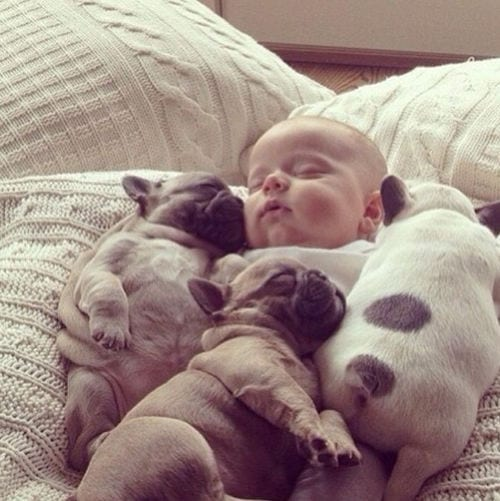 Puppies and babies