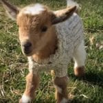 10 Videos of Adorable Animals That Will Make You Adopt a Pet Today