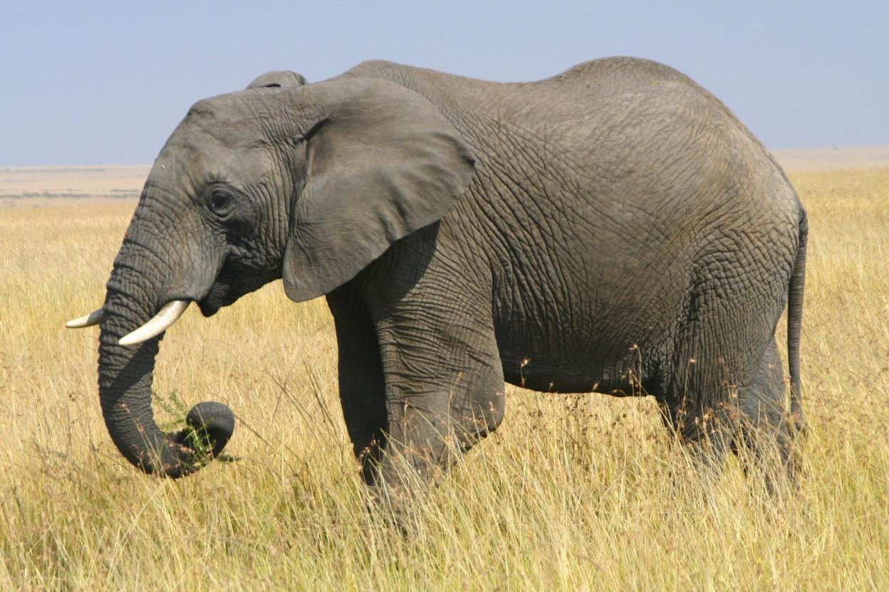 most-dangerous-animals-16
