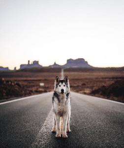 Instagram Pets - Loki