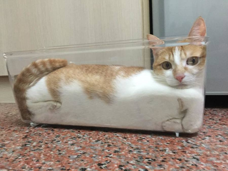 20 funny cats that prove felines will try to fit into just about