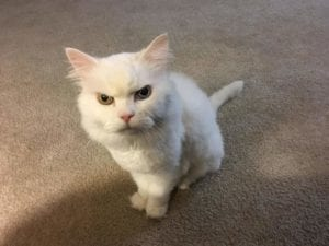 funny-cats-23