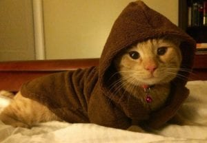 funny-cats-26
