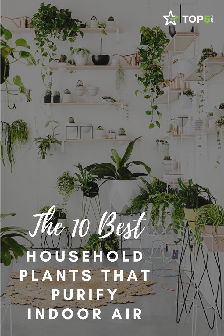 indoor plants - Pinterest