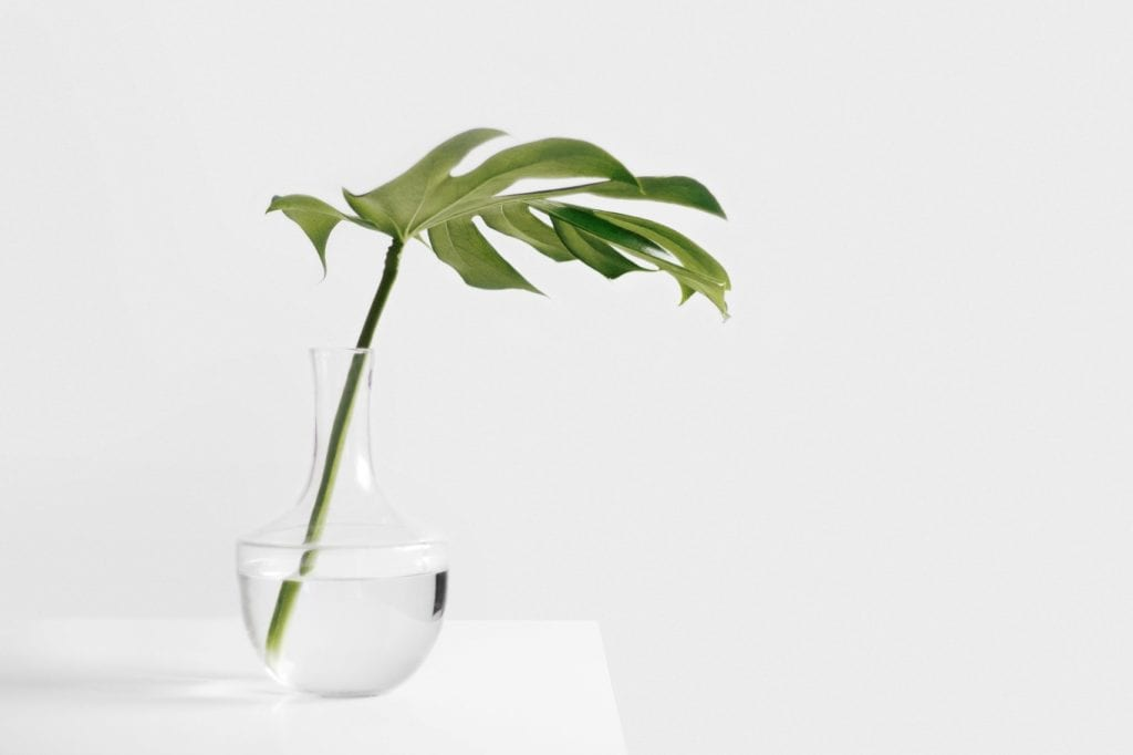 Clear The Air: These 10 Indoor Plants Will Purify The Atmosphere in Your Home
