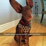 Dog Snapchats That'll Crack You Up