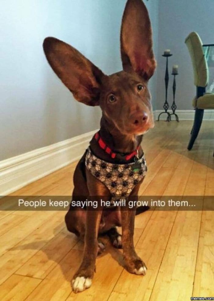 Dog Snapchats That'll Crack You Up