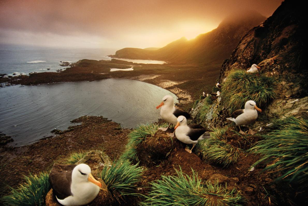 Ducks in a photo