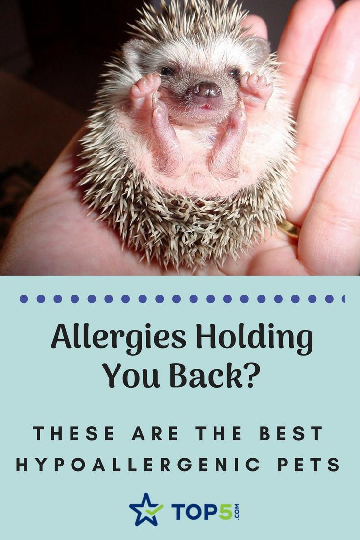 best hypoallergenic pets - Pinterest