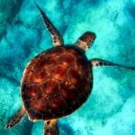 10 Extremely Simple Things Anyone Can Do To Save Endangered Species