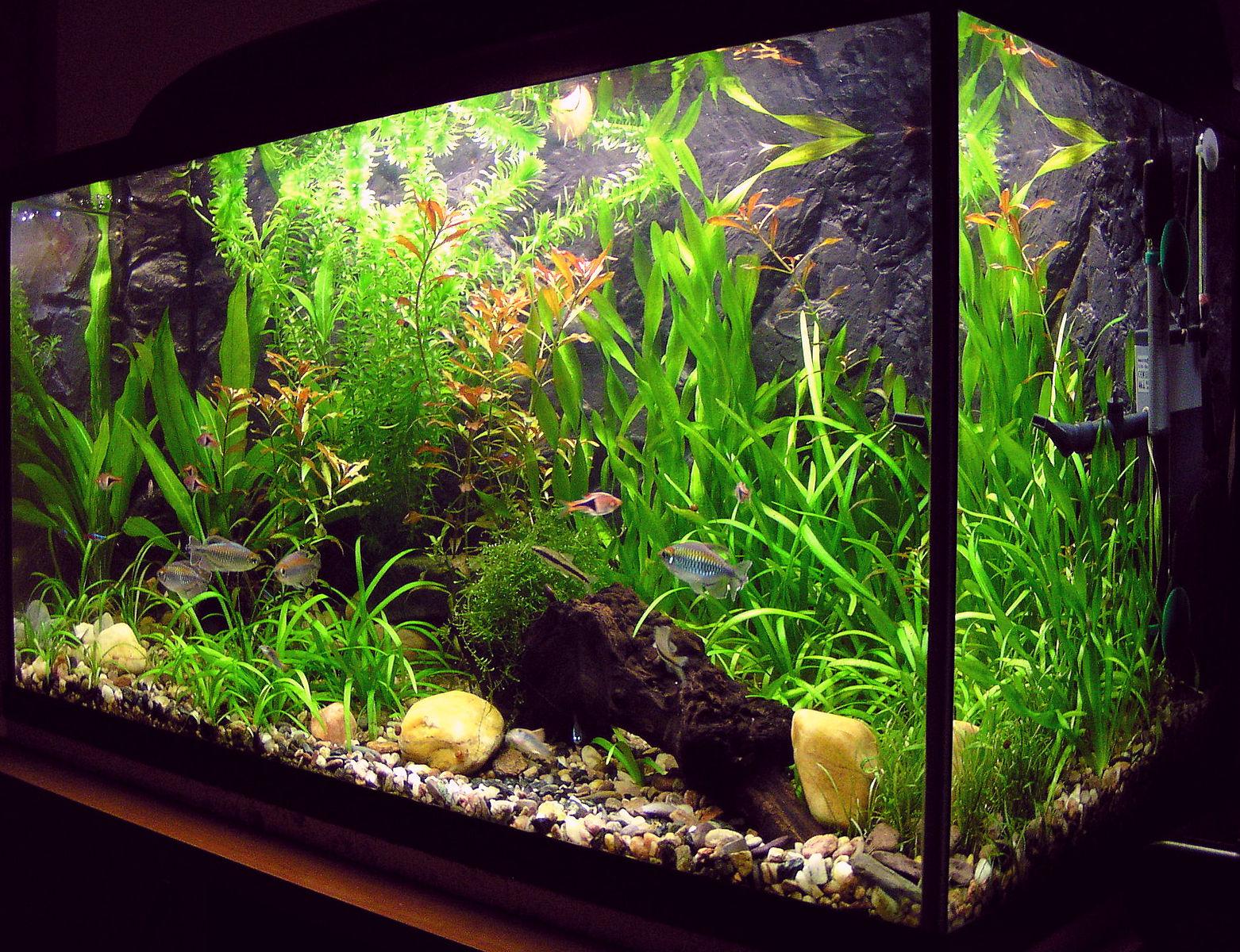 best hypoallergenic pets - fish