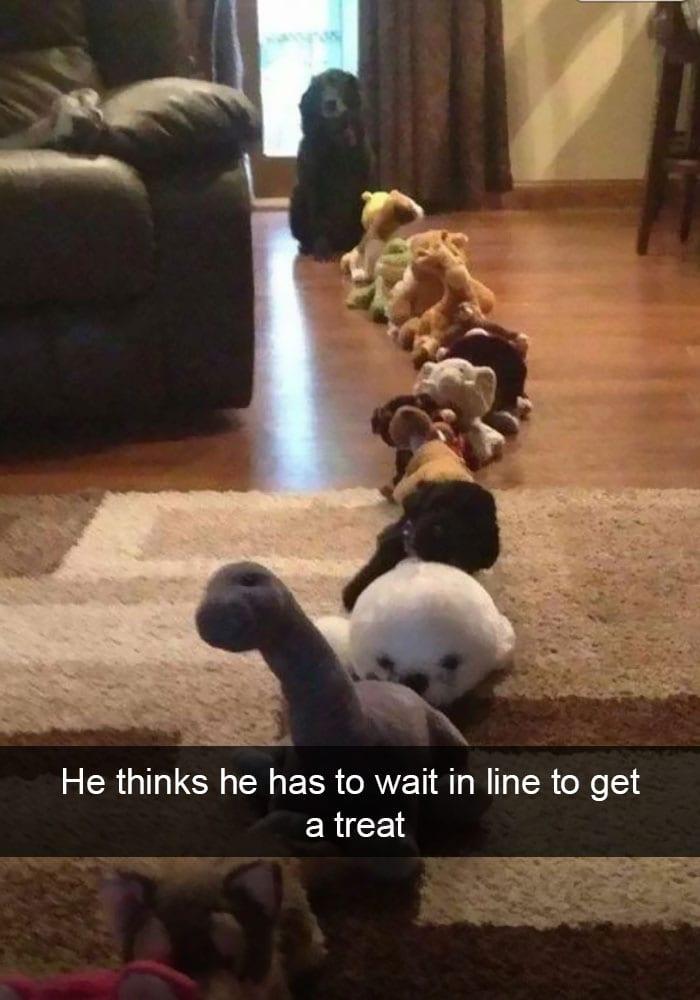 Snapchat Dog