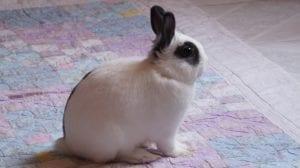 best hypoallergenic pets - rabbit