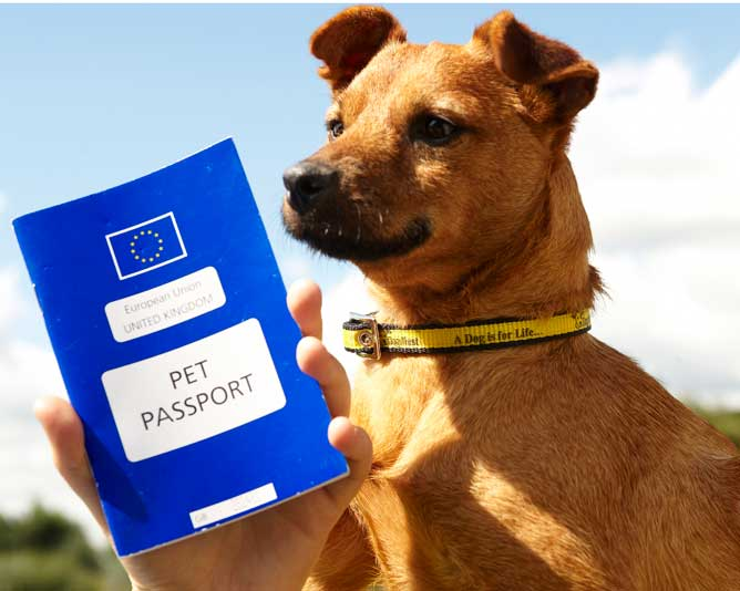 pet travel passport