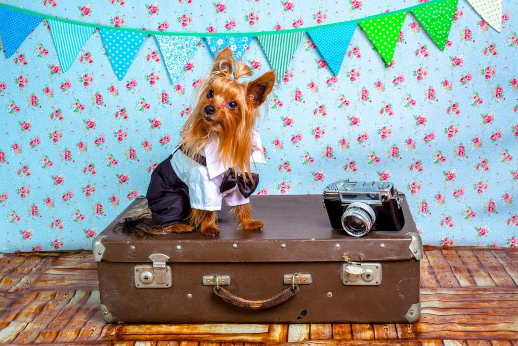 5 Pet Travel Tips That'll Keep You and Your Fur Baby Happy
