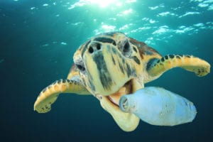 Plastic Pollution - Turtle