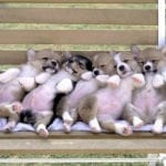 30 Pics of the Cutest Sleeping Pooches