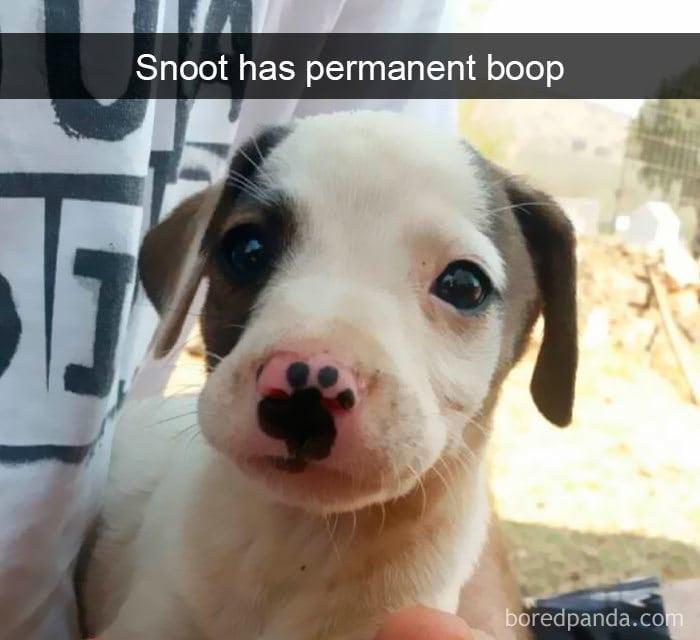 snapchat dog nose