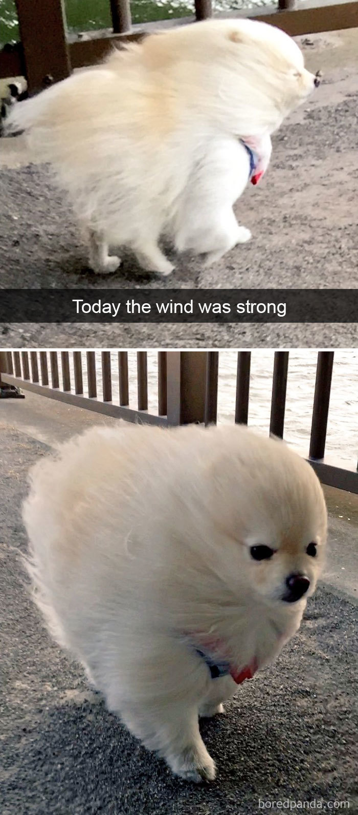 snapchat dog wind tunnel