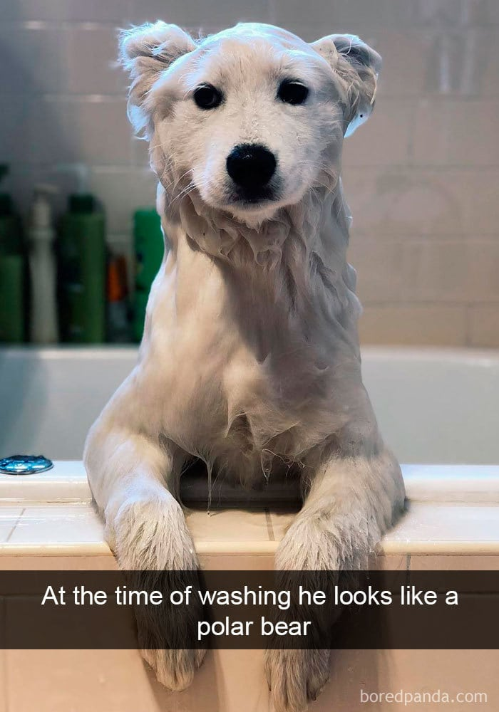 snapchat dog polar dog