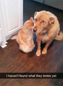 snapchat dog breakup