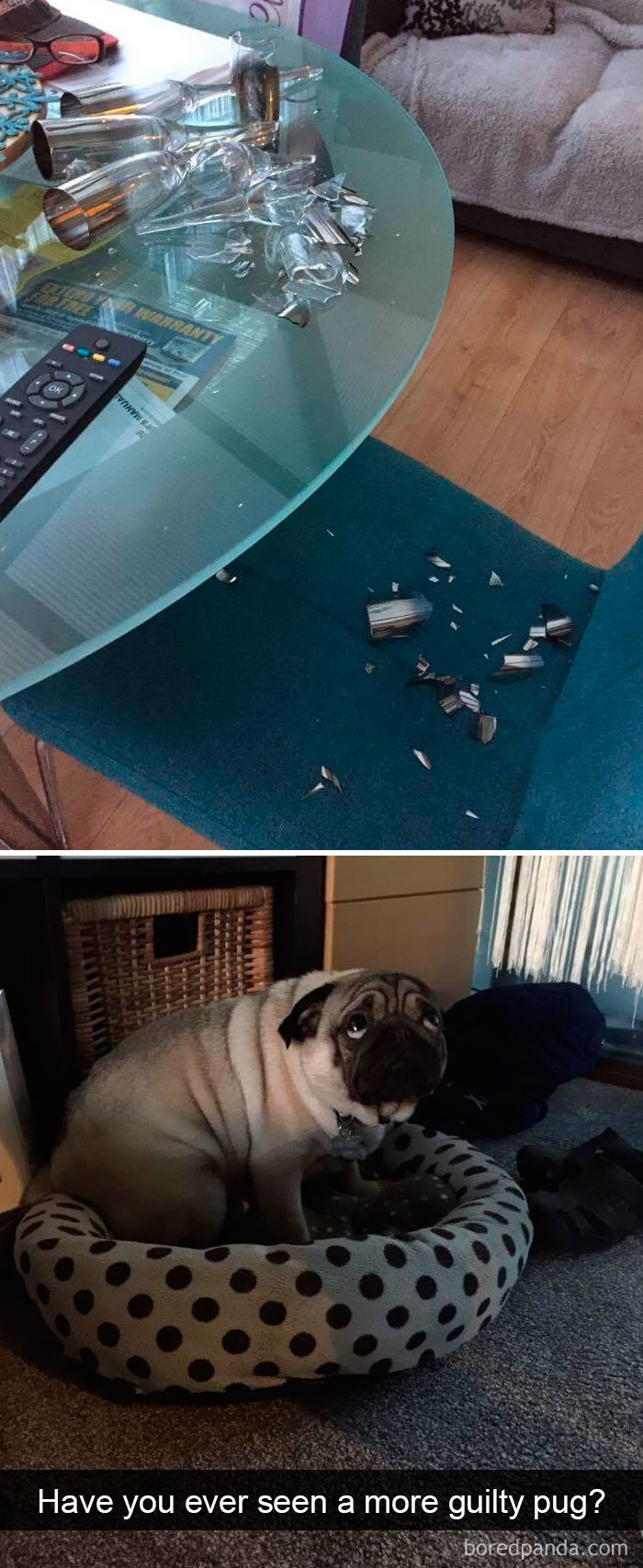 snapchat dog guilt
