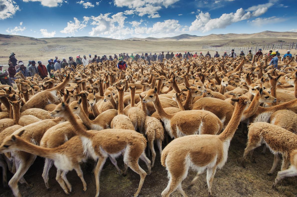 Beautiful Peruvian animals