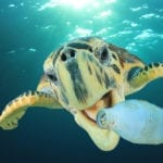 World Ocean Day: How To Reduce Your Plastic Waste