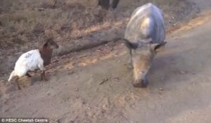 animal friendships dog and rhino