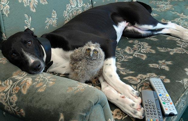 animal friendships owl and dog