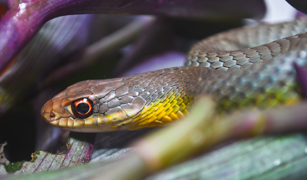 dangerous snakes to avoid worldwide