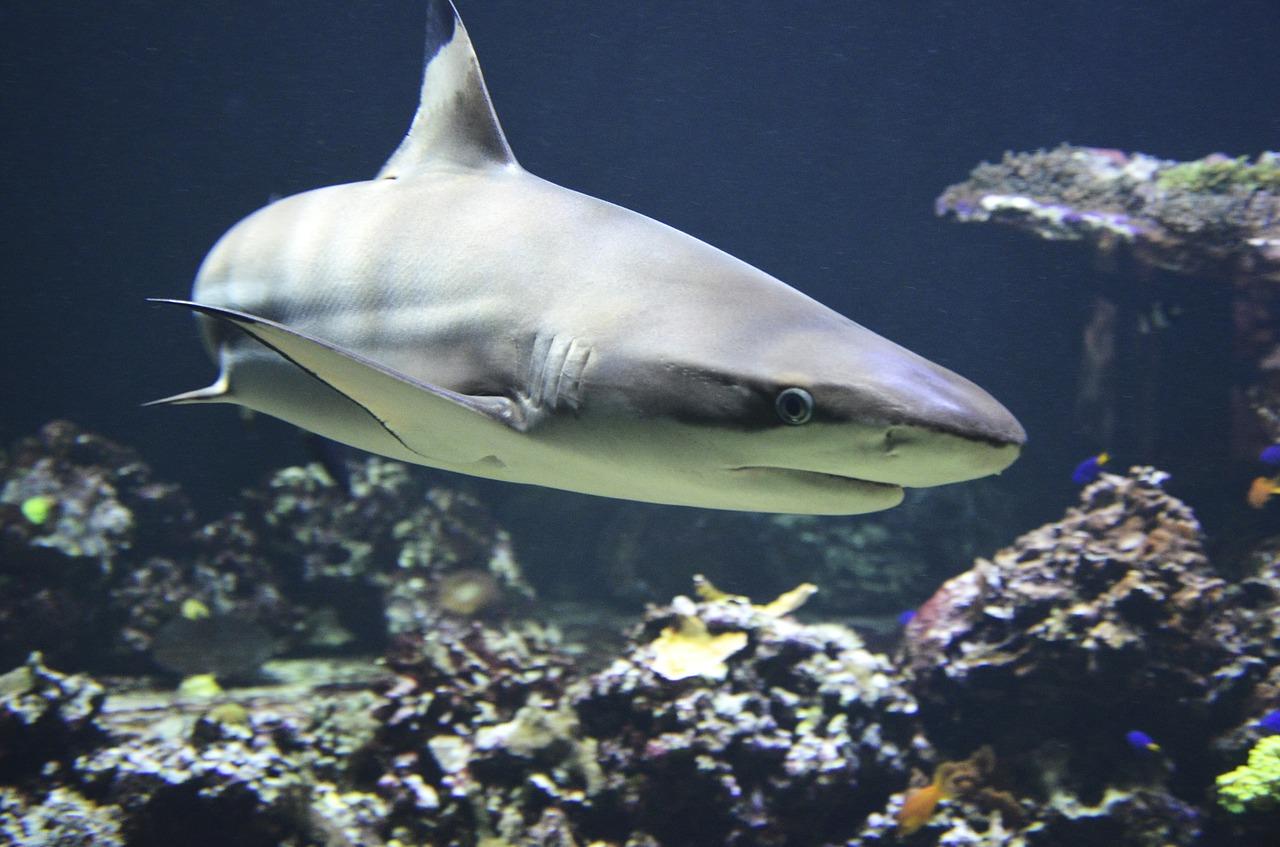 deadly animals shark