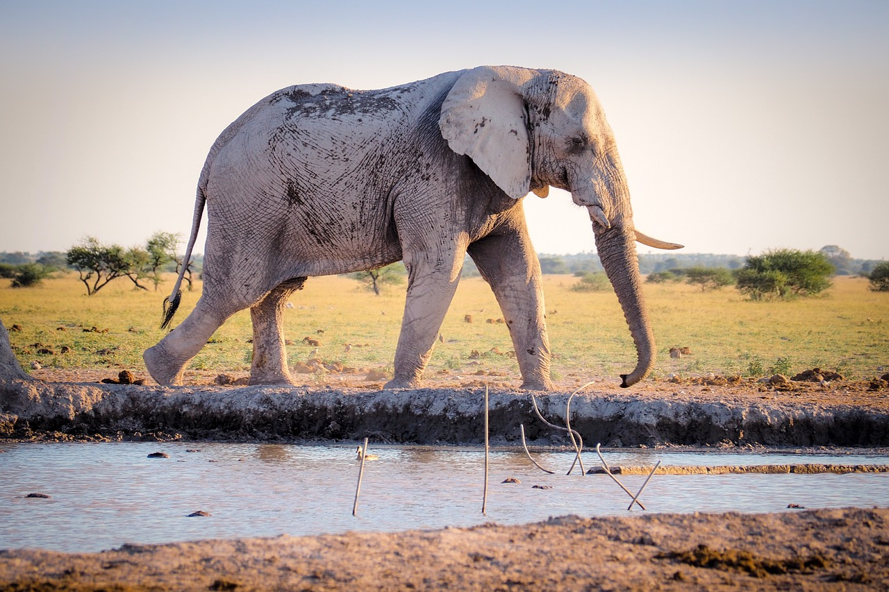 deadly animals elephants