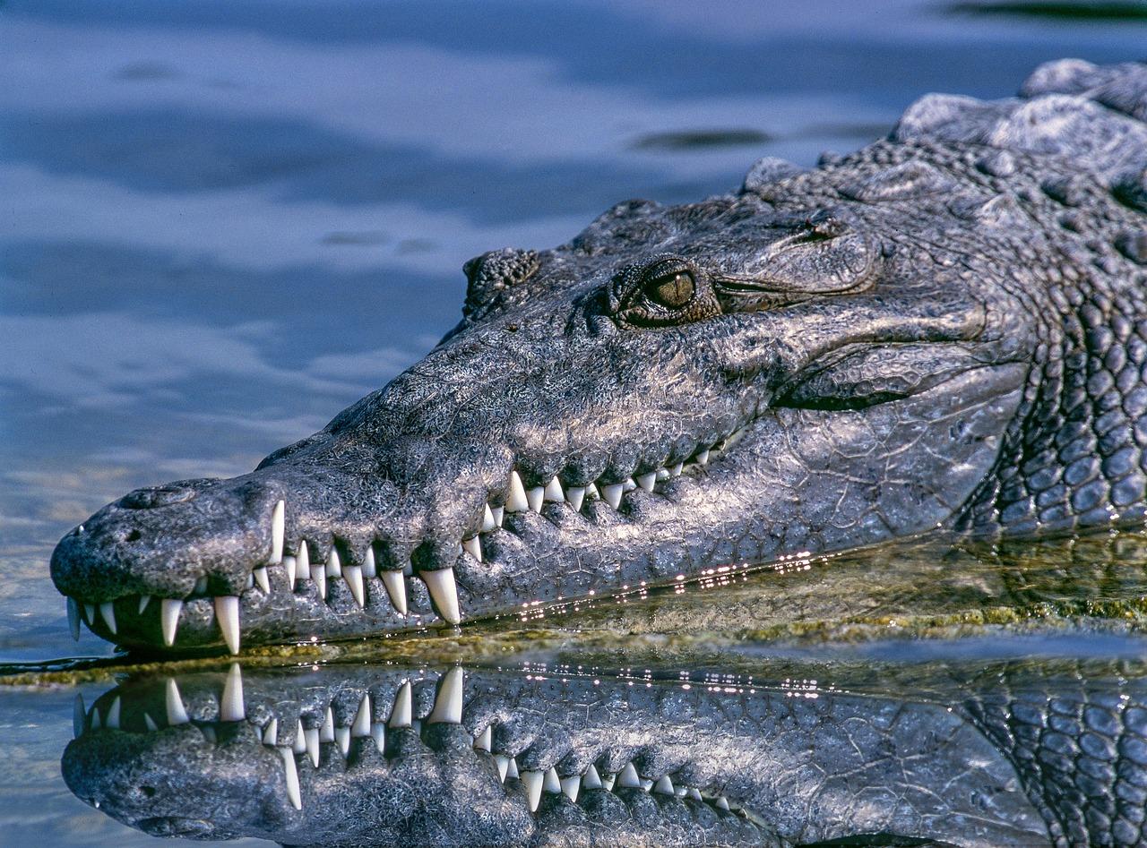 deadly animals crocodiles