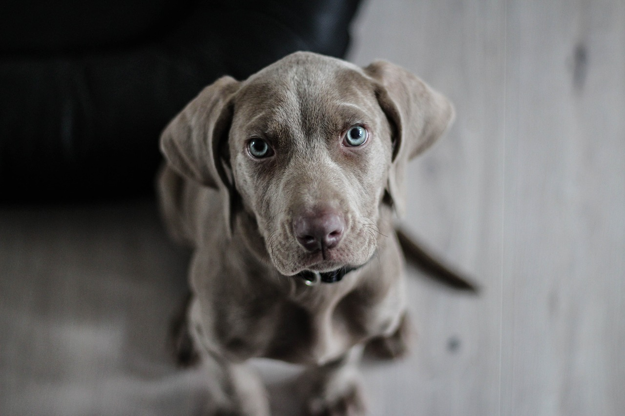 deadly animals dog