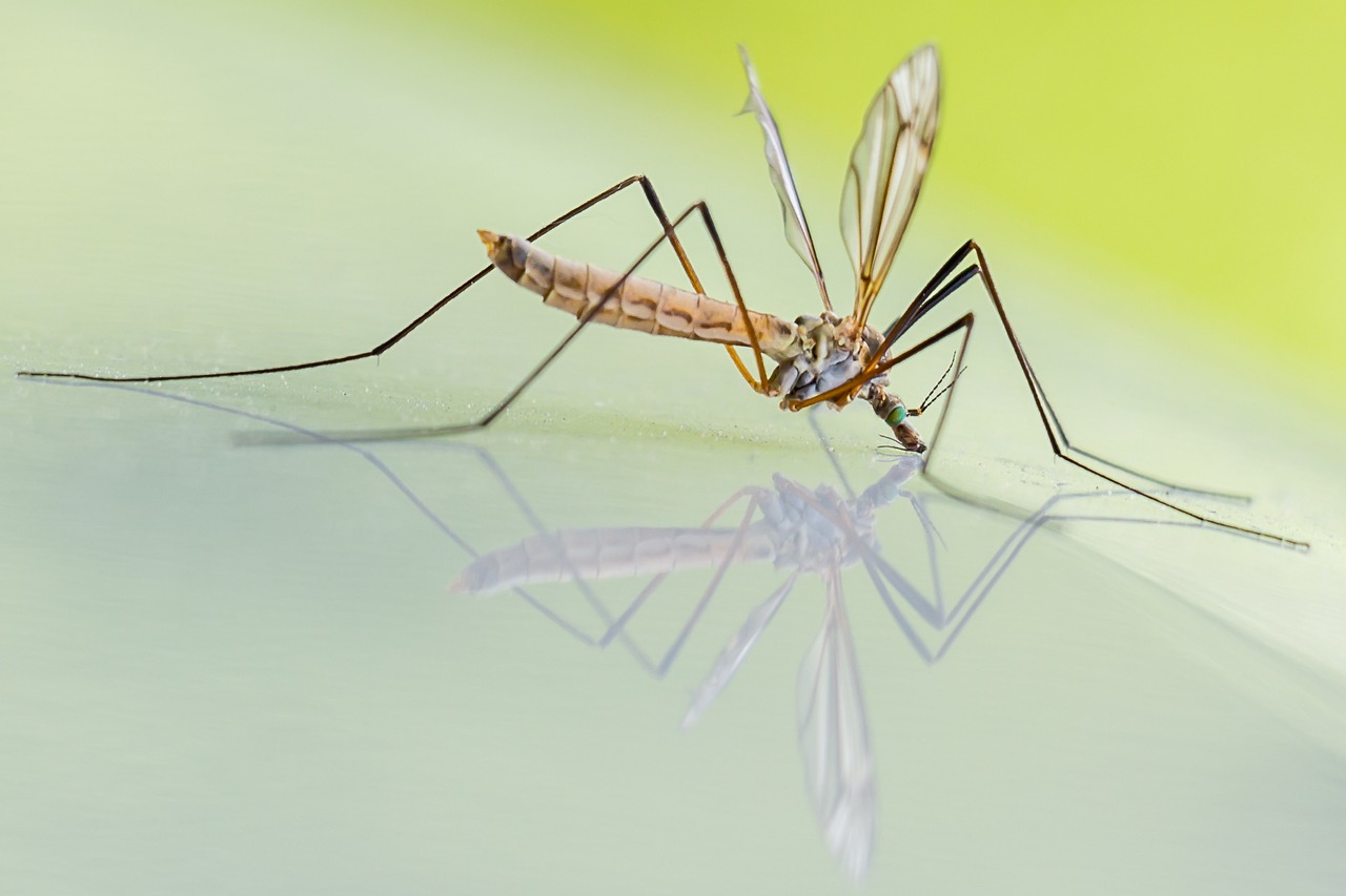 deadly animals mosquito