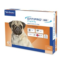 how to get rid of fleas effipro