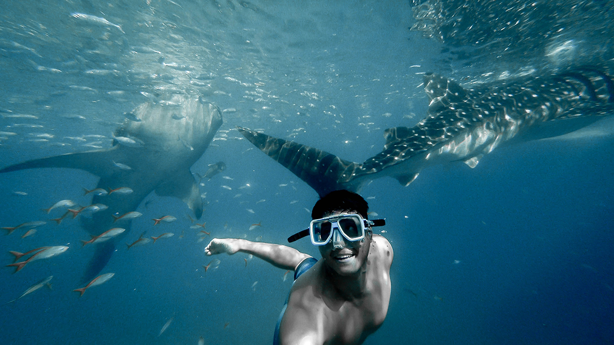 Philippines Island Hopping whale sharks