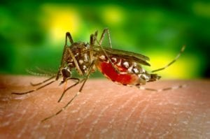 travel medical insurance mosquito