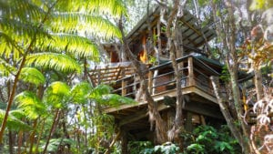 treehouse hotel Exotic Treehouse