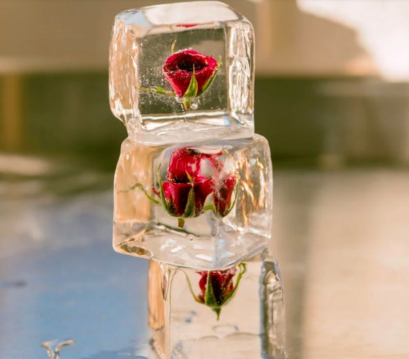 Best Viral Food Artists Disco Cubes Rose Icecubes