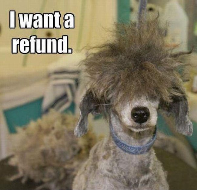 crazy dog haircuts - I want a refund