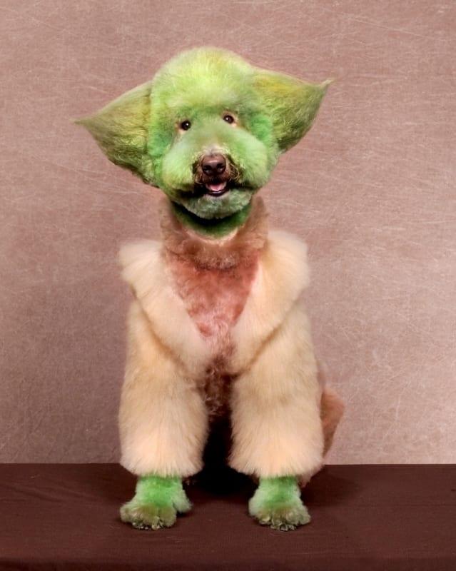 crazy dog haircuts - Yoda