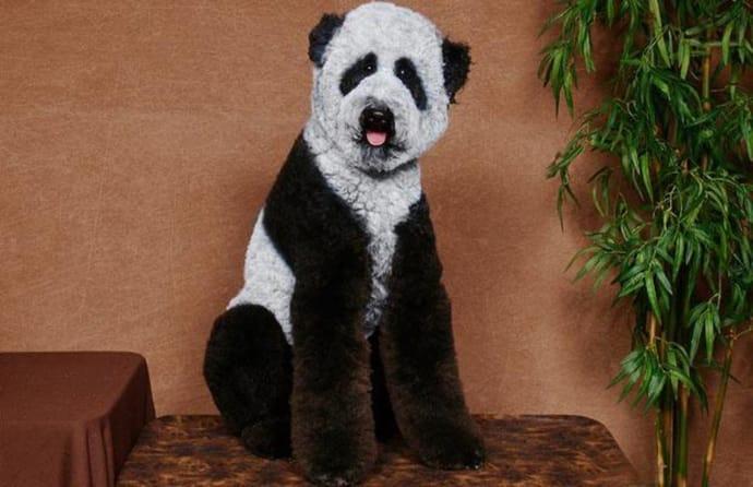 crazy dog haircuts - its a dog panda