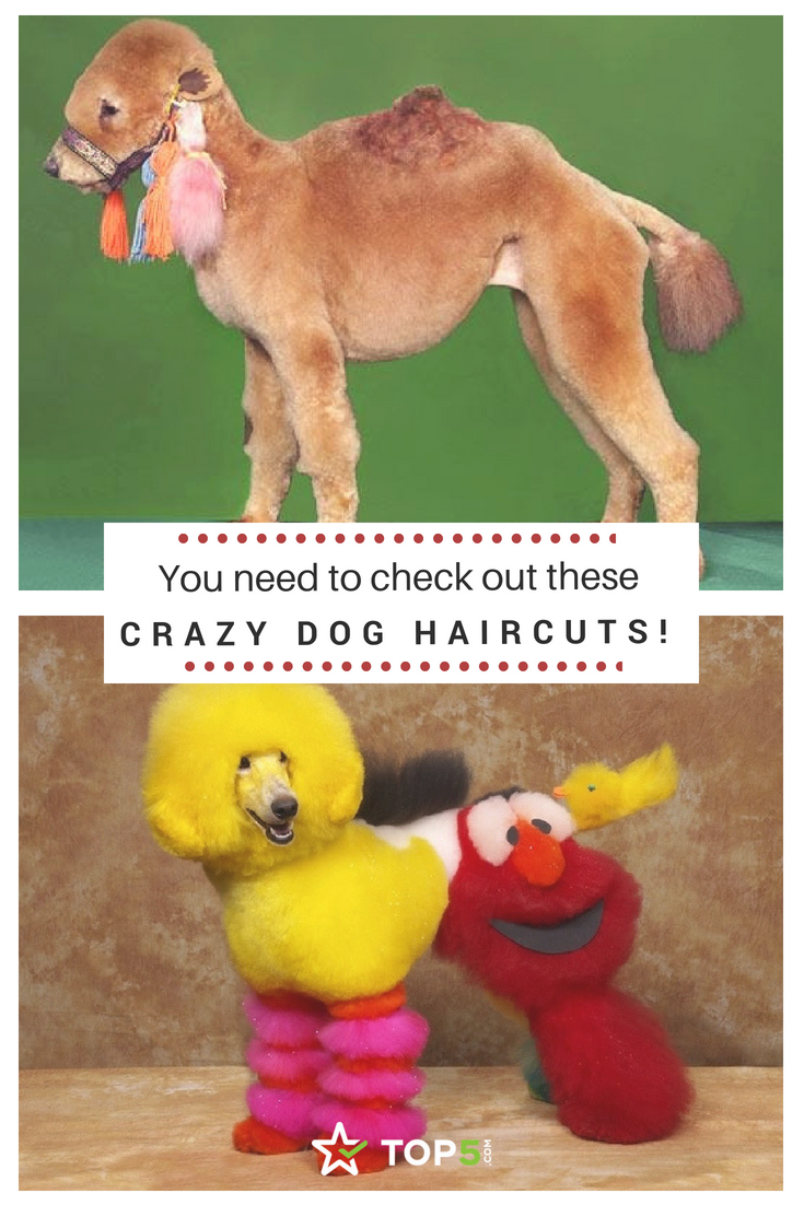 crazy dog haircuts you can't miss